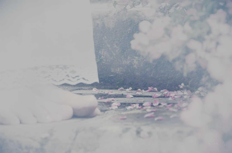 rose-petal-underfoot-arha-2013-arha-Tomomichi-Morifuji