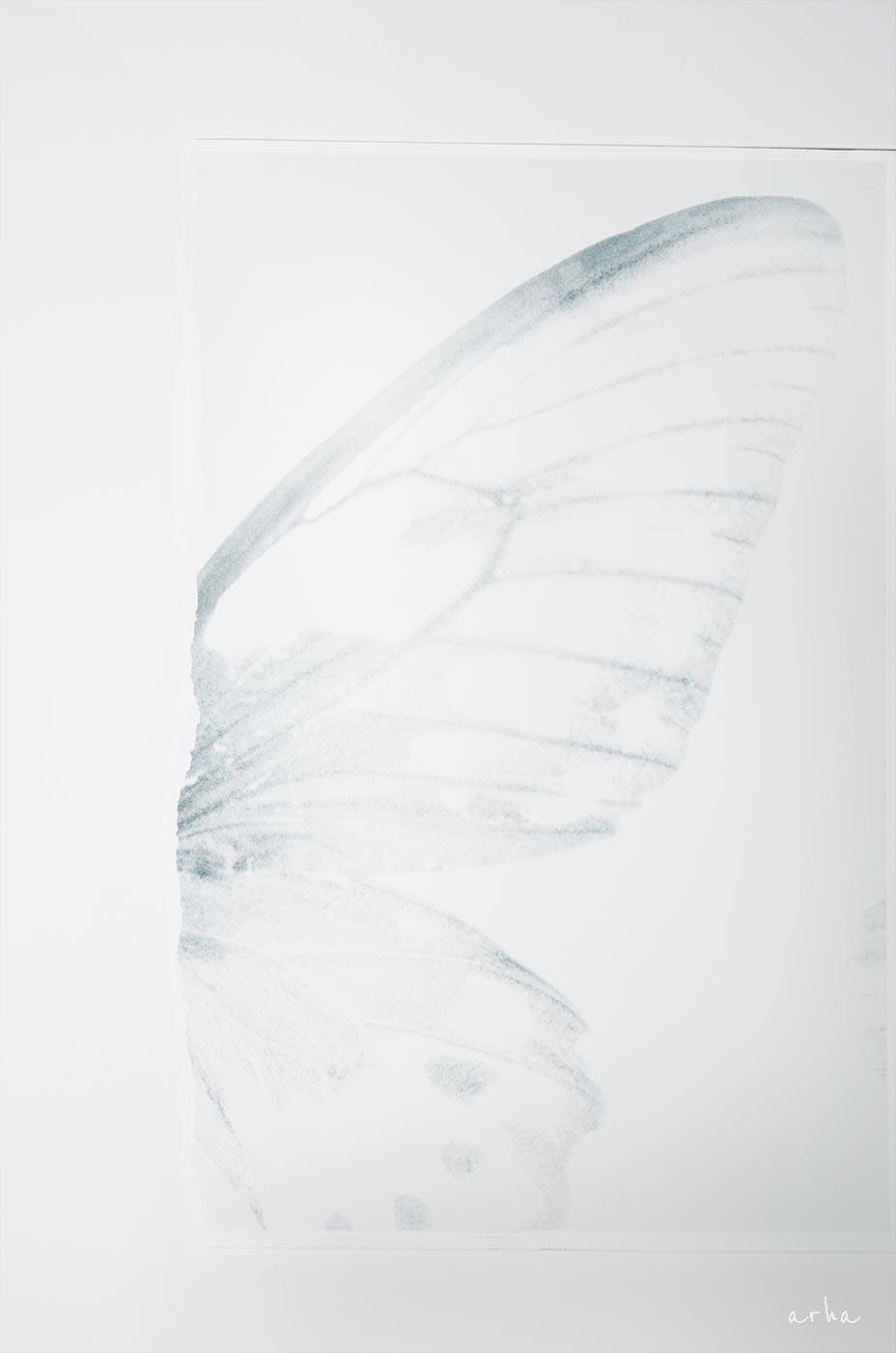 papion-copyright-2012-arha-Tomomichi-Morifuji