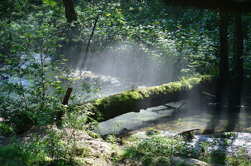 A-nurse-log-and-the-morning-sun-in-kamikochi