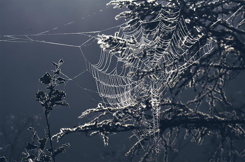 The-cobweb-in-the-morning-sun-in-kamikochi